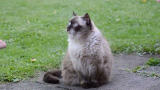 Lovely Cat 02