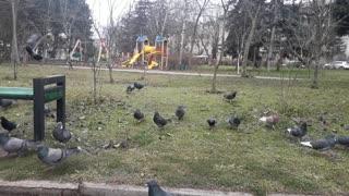 Feeding birds with bread