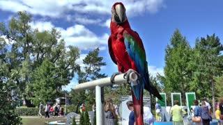 Parrot bird in the public park