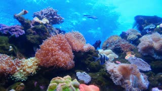 marine life of fishes and corals underwater 2021