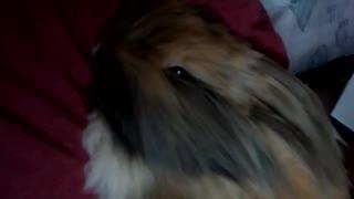 Jasper snuggling