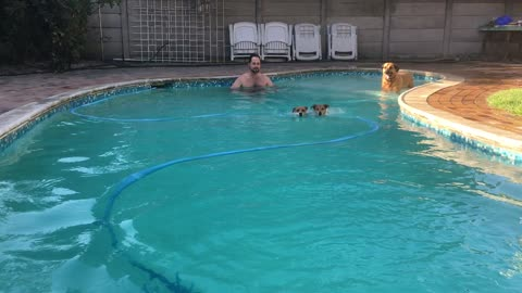 Dog olympics 50m freestyle swim