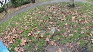 A gluttonous squirrel