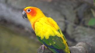 Wonderful Parrot 3 🦜