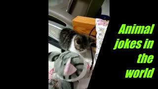 scared kitten 2
