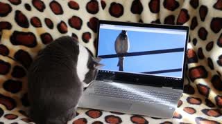 The best funny video clip for cats