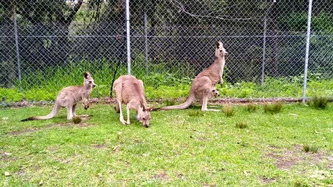 Family of Roos