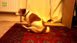 Funny Dogs Watch!