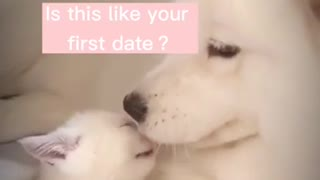 Cute Kitten Plays With a Dog