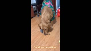 Cat dog competition