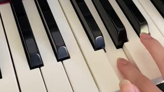 Mocha the Highland Lynx Cat Loves Piano
