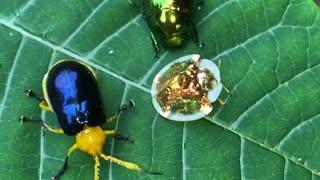 Variety of Strange Beetles