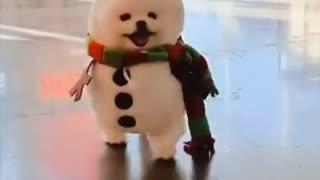 Cute puppy look like snow man