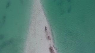 Crocodile On A Beach