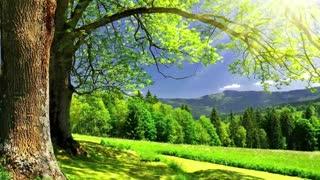 Красивое видео о природе