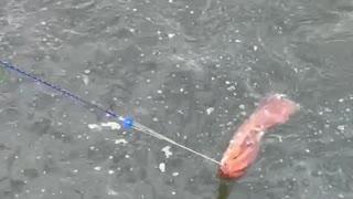 Bait for fishing