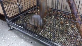 very nimble squirrel