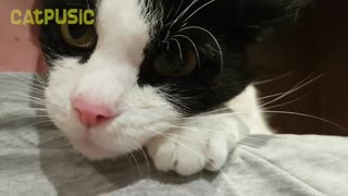 beautiful cats and affection with their owners