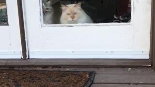 Jealous cat throws shade at neighborhood stray