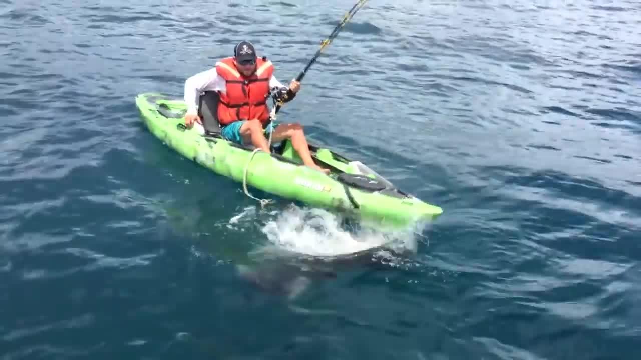Her velter haien båten