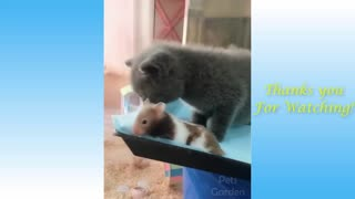 Our funny pet friends