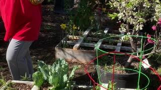 Grid Gardening anyone can do