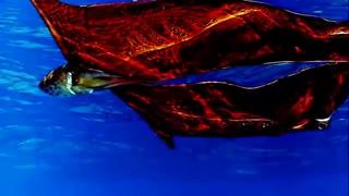 Top 10 weird ocean creatures