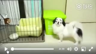 Cute Little Dog With Very Funny Face