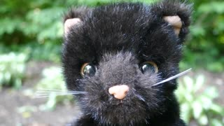 Black Cat, from Little Songs Animals