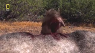 national geographic documentary prehistoric predators wildlife animals