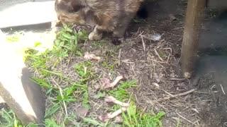 Cute cat eating