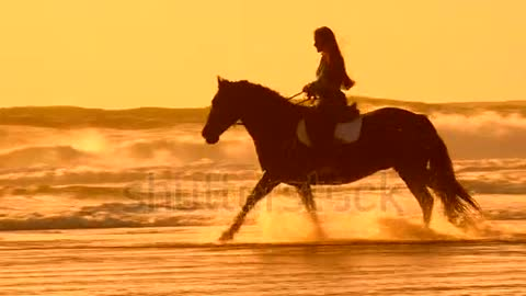 horse running on the beach