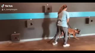 K-9 training every day