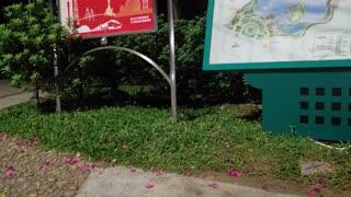 Cats im der Tung Hu Park