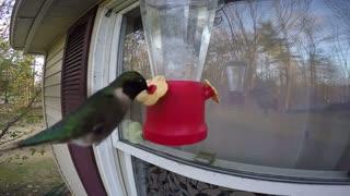 Mission Impossible Hummingbird