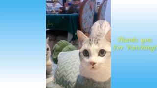 Funny Animals videos compilation