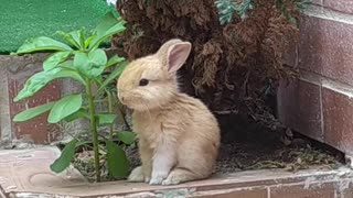 Adorable Bunny Stands for a Snack