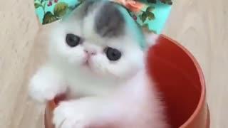 cute little cat - little kitten