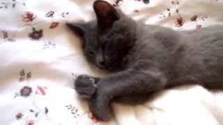 Talking cute cat
