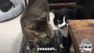 Fluent English speaking cats