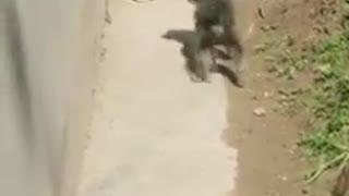 Cat vs dog funny video