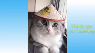 Cute Pets And Funny Animals Compilation - Laugh Daily