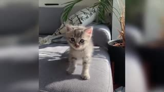 Baby Cats Video - Funny and Cute Cat Videos 2021 Compilation