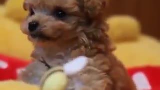 Puppy cuteness overload 2