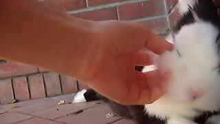 lovely home rabbit cute