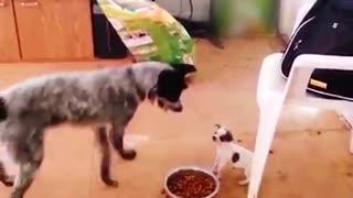 Puppy Fierce Than Big Dog