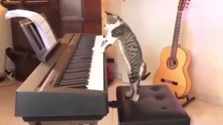 Cat takes anger on piano