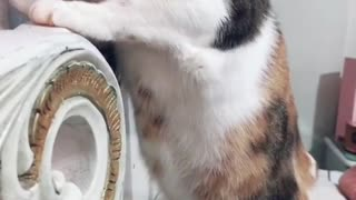 CAT SUSPECTS AN ARGUMENT
