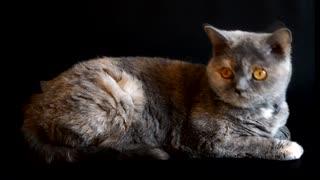 CAT: Beautiful Eyes