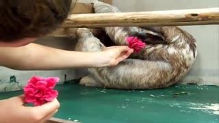 The Incredible World of Sloths